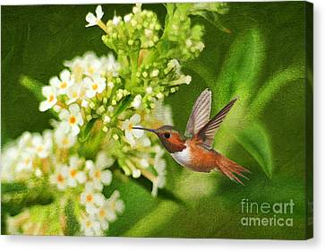 Butterfly In Motion Canvas Print - The Hummer And The Butterfly Bush by Darren Fisher