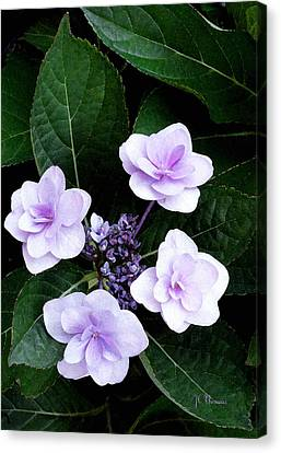The Hydrangea / Flowers Canvas Print by James C Thomas