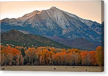 The Impressive Mount Sopris   Canvas Print
