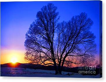 The Incomparable Patience And Fidelity Canvas Print