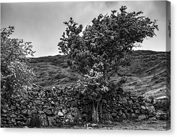 Canvas Print featuring the photograph The Irish Wall And The Tree by Juergen Klust