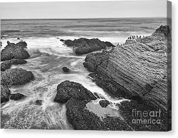 Sea Birds Canvas Print - The Jagged Rocks And Cliffs Of Montana De Oro State Park In California In Black And White by Jamie Pham