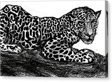 The Jaguar  Canvas Print by Paul Sutcliffe