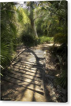 Canvas Print featuring the photograph The Journey Along The Path Comes With Light And Shadows by Lucinda Walter
