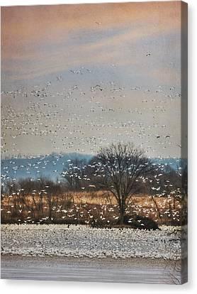 The Journey Begins Canvas Print by Lori Deiter