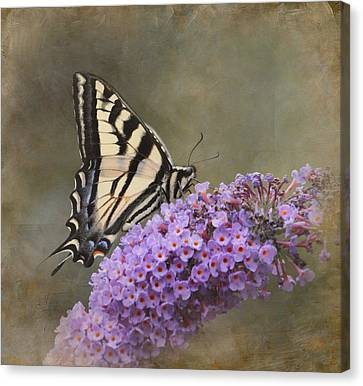 The Tiger Canvas Print - The Joy Of Nectar by Angie Vogel