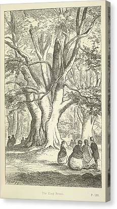 The King Beech Canvas Print by British Library