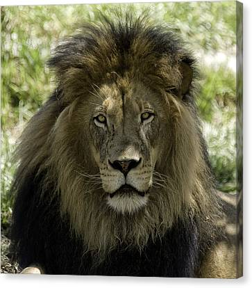 The King Canvas Print by Gary Neiss