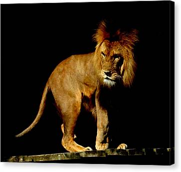 The King Canvas Print by Martin Newman