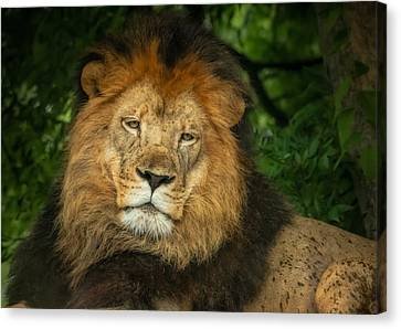 Canvas Print featuring the photograph The King Rests by Linda Karlin