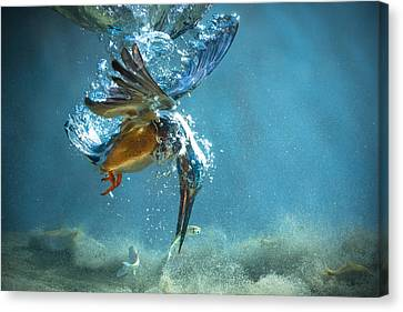 Explosion Canvas Print - The Kingfisher by Petar Sabol