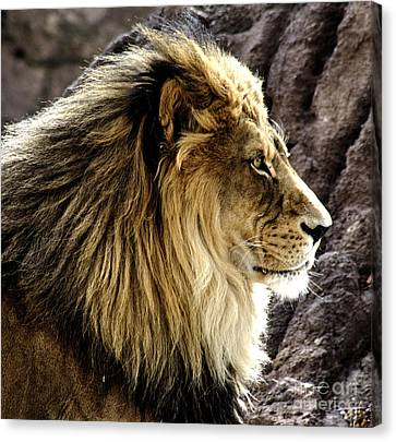 The Kings Pose Canvas Print by Steven Parker