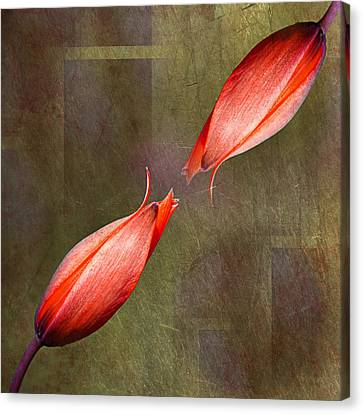The Kiss Canvas Print by Claudia Moeckel