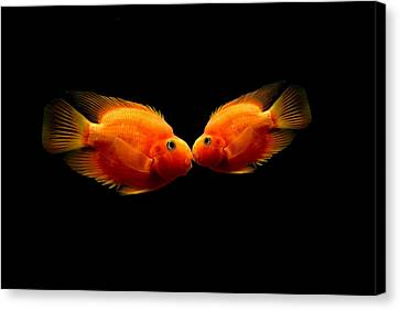 The Kiss Canvas Print by Heike Hultsch