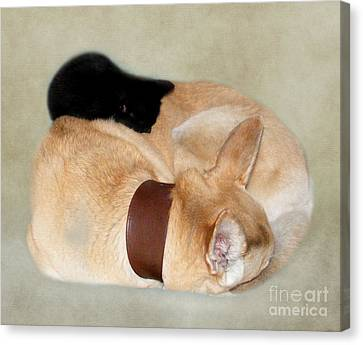 The Kitten On The Dog Bed Canvas Print