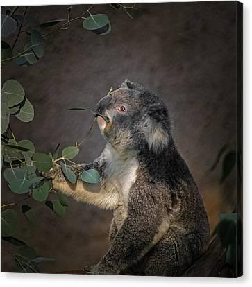 The Koala Canvas Print by Ernie Echols