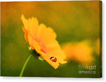 The Lady Bug Canvas Print by Darren Fisher