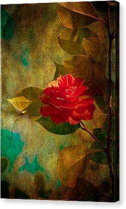 The Lady Of The Camellias Canvas Print by Loriental Photography