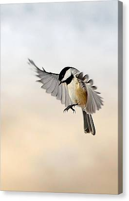 The Landing Canvas Print by Bill Wakeley