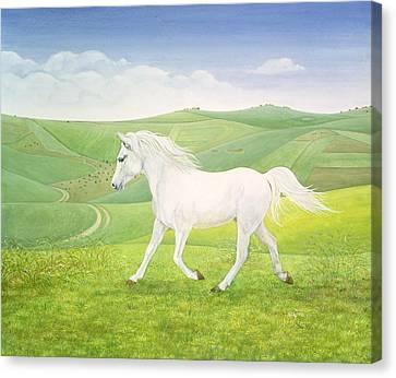 The Landscape Horse Canvas Print by Ditz