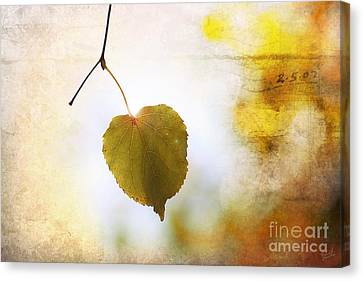The Last Leaf Canvas Print by Nishanth Gopinathan