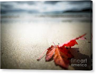 The Last Leaf Canvas Print by Susan Cole Kelly Impressions