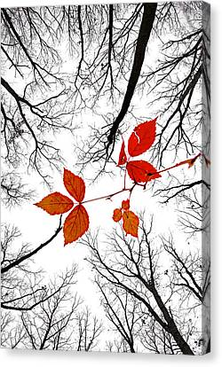 The Last Leaves Of November Canvas Print by Robert Charity