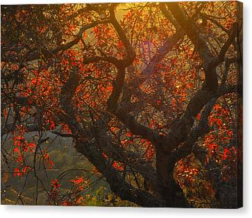 The Last Leaves On The Tree Canvas Print by Rebecca Cearley