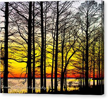 The Last Light Canvas Print by Bruce A Lee