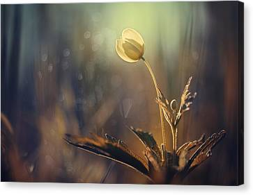 The Last Light Canvas Print by Magda  Bognar