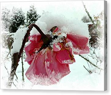 The Last Rose Canvas Print by Morag Bates