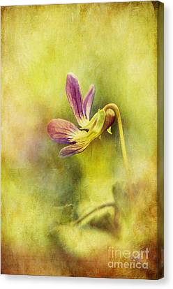 The Last Violet Canvas Print by Lois Bryan