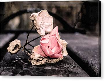 Ruin Canvas Print - The Last Wilted Roses by Tommytechno Sweden