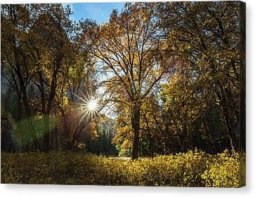 The Late Afternoon Autumn Sun Shines Canvas Print