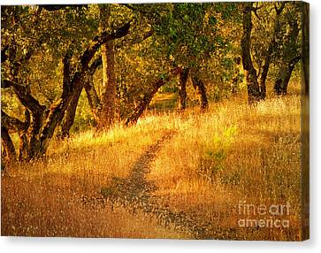 The Late Afternoon Walk Canvas Print by Roselynne Broussard