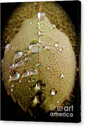 The Leaf After Rain Canvas Print by CML Brown