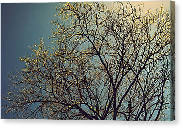 The Leaves Are Returning Canvas Print by Jhoy E Meade