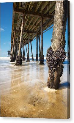 The Life Of A Barnacle Canvas Print by Ryan Manuel