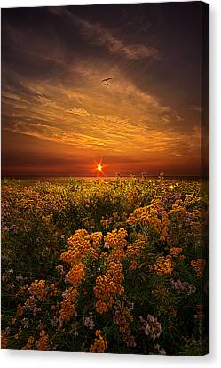 The Light Of Day Canvas Print by Phil Koch