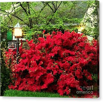 Canvas Print featuring the photograph The Light Red Bush Bella by Becky Lupe