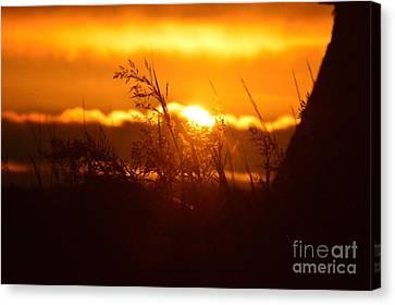 The Light Shines Canvas Print by Sheldon Blackwell