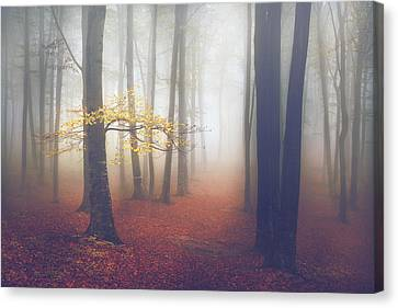 The Light-tree II Canvas Print by Toma Bonciu