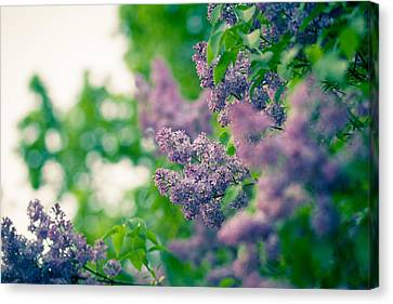 The Lilac Canvas Print by Andreas Levi