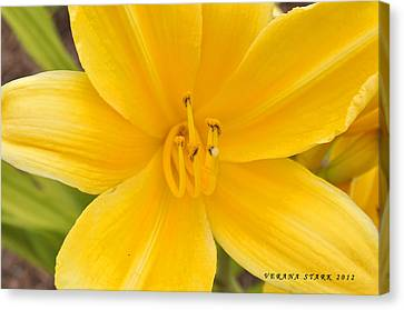 Canvas Print featuring the photograph The Lily From Kentucky by Verana Stark