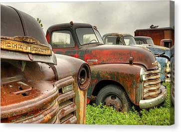 The Line Up 3 Canvas Print by Thomas Young