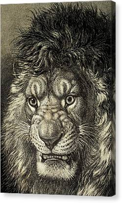 The Lion Canvas Print by European School