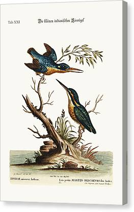 The Little Indian Kingfishers Canvas Print by Splendid Art Prints