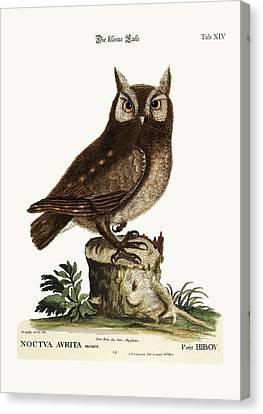 The Little Owl Canvas Print by Splendid Art Prints