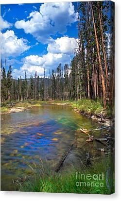 The Little Redfish Creek Canvas Print by Robert Bales
