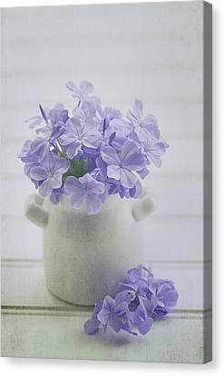 The Little White Pot Canvas Print by Kim Hojnacki